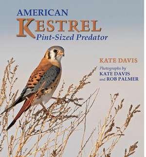 American Kestrel:  Pint-Sized Predator de Kate Davis