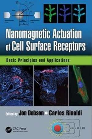 Nanomagnetic Actuation of Cell Surface Receptors