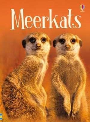 Maclaine, J: Meerkats de James Maclaine