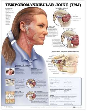 Temporomandibular Joint (TMJ) Anatomical Chart