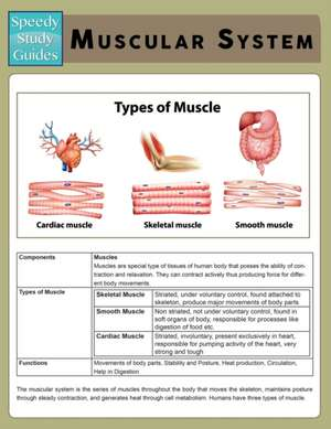 Muscular System (Speedy Study Guide)