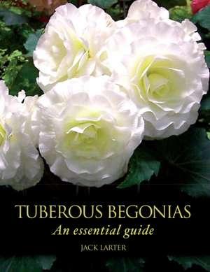Tuberous Begonias