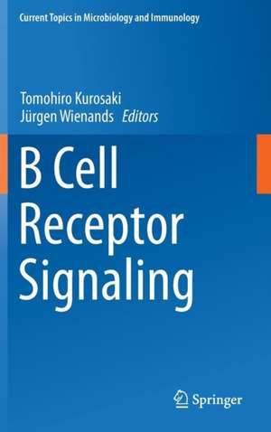 B Cell Receptor Signaling imagine