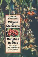 Millions of Monarchs, Bunches of Beetles – How Bugs Find Strength in Numbers