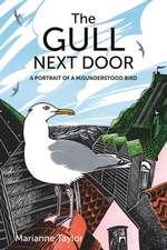 The Gull Next Door – A Portrait of a Misunderstood Bird