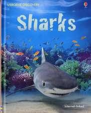 Shiekh-Miller, J: Sharks