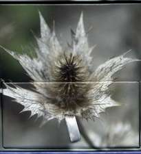 Memo Block (Winter Flower)