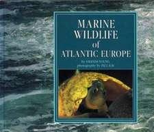 Marine Wildlife of Atlantic Europe