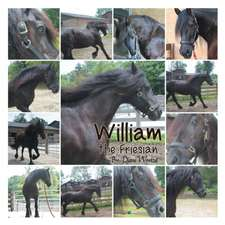 William the Friesian:  Loose Ends