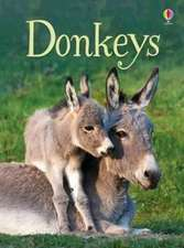 Beginners Donkeys
