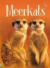 Maclaine, J: Meerkats