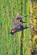 The German Wirehaired Pointer Dog Journal