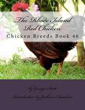 The Rhode Island Red Chicken