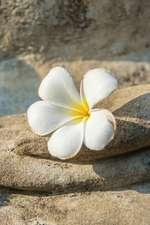 Budhha Palm Flower Journal
