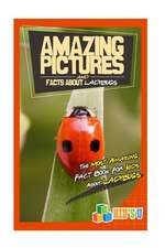 Amazing Pictures and Facts about Ladybugs