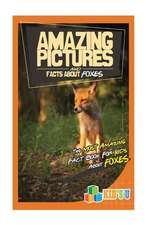 Amazing Pictures and Facts about Foxes