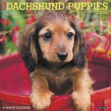 2019 Just Dachshund Puppies Wall Calendar (Dog Breed Calendar)