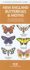 New England Butterflies & Moths:  An Introduction to Familiar Species