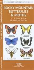 Rocky Mountain Butterflies & Moths:  An Introduction to Familiar Species