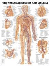 Vascular System and Viscera Anatomical Chart