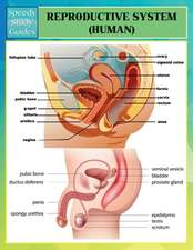 Reproductive System (Human) (Speedy Study Guides)