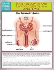 Lower Abdomen and Reproductive System Anatomy (Speedy Study Guide):  Repeatable Tips on How to Build a Business That Attracts Profits Almost Immediately