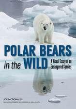 Polar Bears In The Wild: A Visual Essay