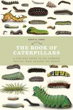 Book of Caterpillars