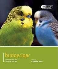 Budgerigar