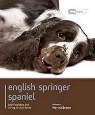 English Springer Spaniel: Dog Expert