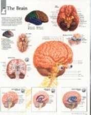 The Brain Chart:  Wall Chart
