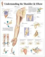 Understanding the Shoulder & Elbow