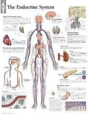 The Endocrine System Chart:  Wall Chart