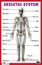 Skeletal System Educational Chart