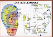 Ear Reflexology -- A4